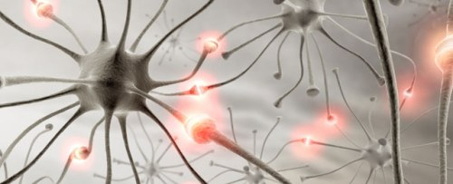 neurons_cropped