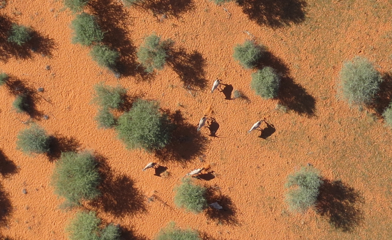 MM Oryx